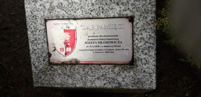 Dąb Pamięci ku czci kom. Józefa Młodowicza posadzono jedenaście lat temu na pl. Wolności w Szubinie