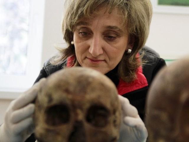 Dr Iwona Ptaszyńska bada szkielety powstańców  z 1831 roku
