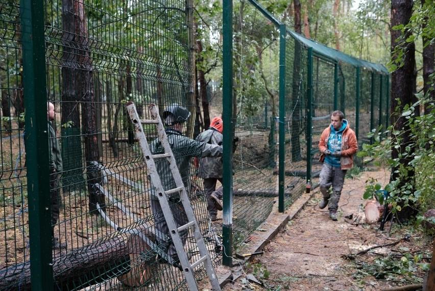 Orkan Ksawery: Tak wichura zniszczyła Nowe Zoo