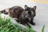 Koty szukają domu. Do adopcji Grażyna [ZDJĘCIA]