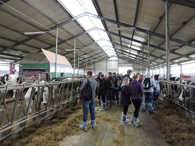Zajęcia terenowe. Wizyta w gospodarstwie w Kiedrowie