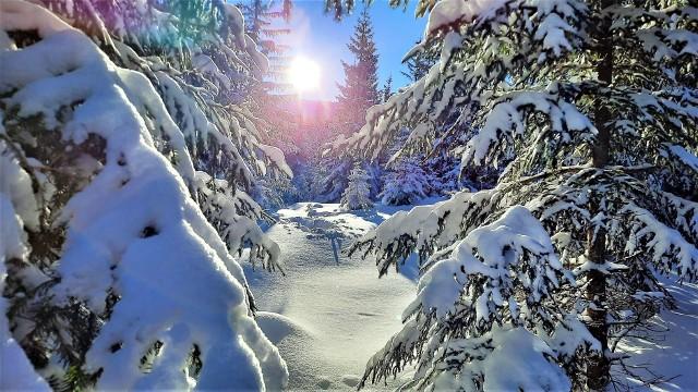 Słońce i mróz to wymarzona pogoda na wyprawę w Karkonosze. W mroźną niedzielę, 31 stycznia 2021 roku, na szlakach do schronisk Samotnia i Strzecha Akademicka było sporo osób