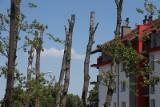 Kikuty drzew straszą na Brochowie. Nie da się już ich uratować [ZDJĘCIA]