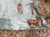 Ryczów. Wykopali z ziemi szczątki żołnierzy Wehrmachtu