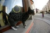 Na pomoc bezdomnym kotom