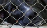 13-latka miała znęcać się nad psami. Zwierzęta zostały odebrane przez szczeciński TOZ