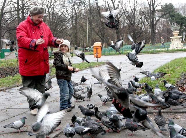 Gołębi w centrum Łodzi jest bardzo dużo, lubią zwłaszcza stare kamienice