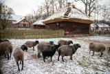 Zimowy spacer po Muzeum Rolnictwa w Ciechanowcu. To jedno z najbardziej niezwykłych miejsc na Podlasiu (ZDJĘCIA)