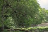 Las Odrzański. W tym niezwykłym miejscu można poczuć się jak w baśniowej krainie. Dlaczego warto się tu wybrać na spacer?