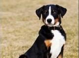 Szwajcar oskarżony o molestowanie swojego psa