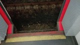 Pociąg Kolei Śląskich stanął w szczerym polu przed Myszkowem. Ludzie skakali na tory! [ZDJĘCIA]
