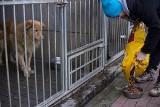 """Zagłosuj na gdyńskie Ciapkowo w akcji """"Mam serce dla psów i kotów"""" i podaruj posiłek zwierzakom"""