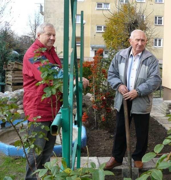 Antoni Zawłocki (z lewej) i Antoni Orłowski robią ostatnie jesienne porządki w osiedlowym ogrodzie. Za kilka tygodni postawią tu świąteczną szopkę.