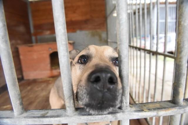 Warunki w schronisku dla bezdomnych zwierząt są tragiczne. Konieczna jest budowa nowego obiektu. Kwestią sporną pozostaje gdzie...