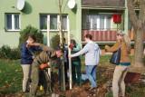 Uczniowie posadzili drzewa na ulicy 11 listopada w Kędzierzynie-Koźlu
