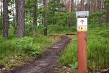 Turystyka rowerowa na Podkarpaciu. Leśnicy z Nadleśnictwa Mielec proponują ciekawe trasy [ZDJĘCIA]