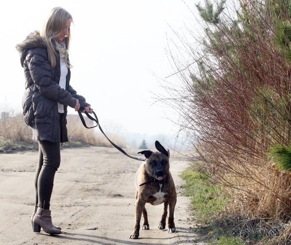 Nasze zwierzaki chętniej przebywają na dworze. Z niewinnej wyprawy do domu wracają niekiedy z kilkoma kleszczami albo pchłami. Możesz tego uniknąć.