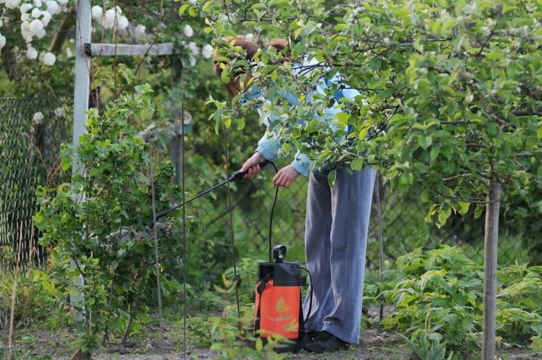 Czy Zielonej Górze potrzebne są nowe ogrody działkowe? -pyta...