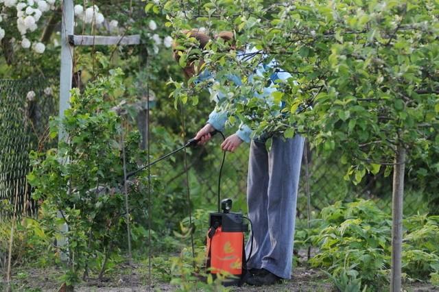 Czy Zielonej Górze potrzebne są nowe ogrody działkowe? -pyta prezydent Zielonej Góry Janusz Kubicki. Pytani przez nas mieszkańcy nie mają wątpliwości, że bardzo są potrzebne.