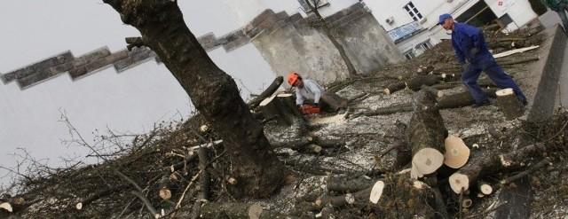 Wycinka zaczęła się jeszcze w grudniu zeszłego roku. Proboszcz parafii chciał uporządkować obszar wokół świątyni i - jak twierdził - poprawić kanalizację deszczową.