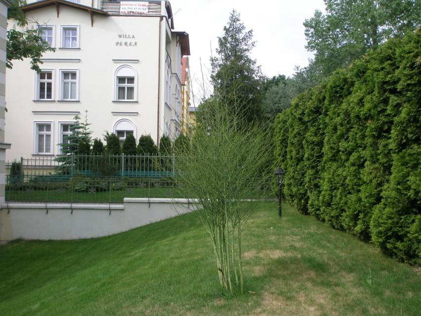 To dekoracyjne rośliny, które warto uprawiać nie tylko z...