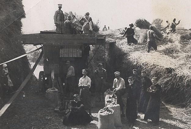 Rok 1937. Żniwa w Żydowie, gm. Lubraniec. Pośrodku (w białej...