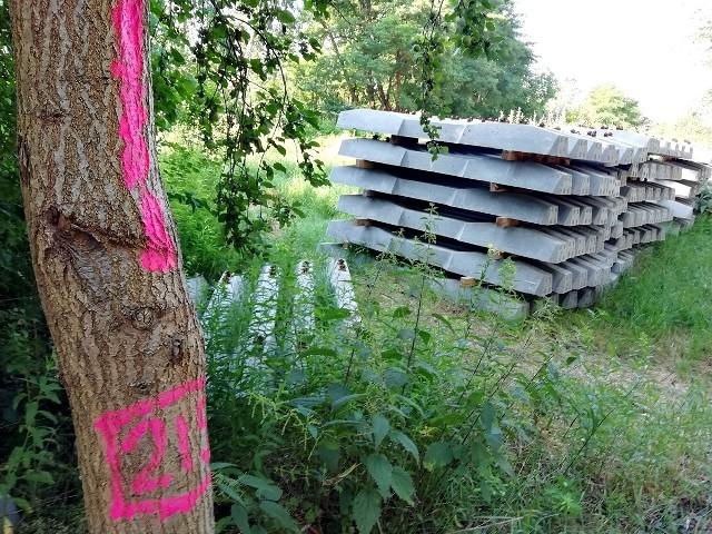 Drzewa i krzewy rosnące na Wojszynie, Ołtaszynie i Partynicach będą wycięte. PKP PLK remontuje linię kolejową do Świdnicy