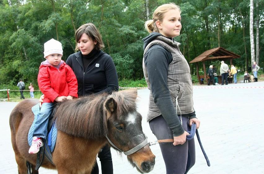 Sporym powodzeniem wśród odwiedzających Centrum Edukacji Ekologicznej cieszyły się bezpłatne przejażdżki kucykiem