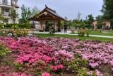 Wiosna 2018 w parku oliwskim w Gdańsku. Kwitną kwiaty, drzewa i krzewy. Park pięknie się prezentuje w intensywnych barwach [zdjęcia]