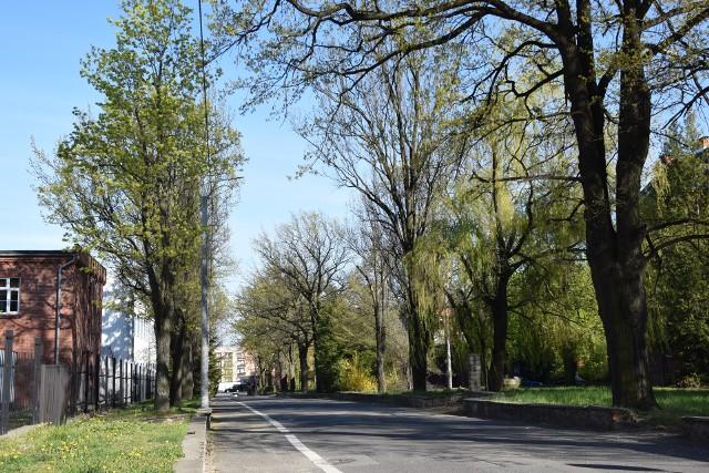 Władze miejskie chcą wyciąć drzewa rosnące po lewej stronie ul. Legionów, patrząc w ulicę Dąbrowskiego