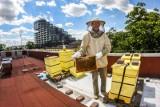 Pszczoły z dachu bydgoskiej uczelni można obserwować w internecie. Poznajcie inne miasta, gdzie hodowane są te pożyteczne owady [zdjęcia]
