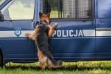 Zobaczcie jak wygląda szkolenie psa policyjnego
