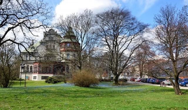 Spacer Zielonej Łodzi odbędzie się po parku im. biskupa Michała Klepacza, który jest obecnie pełen niebiesko kwitnących cebulic.