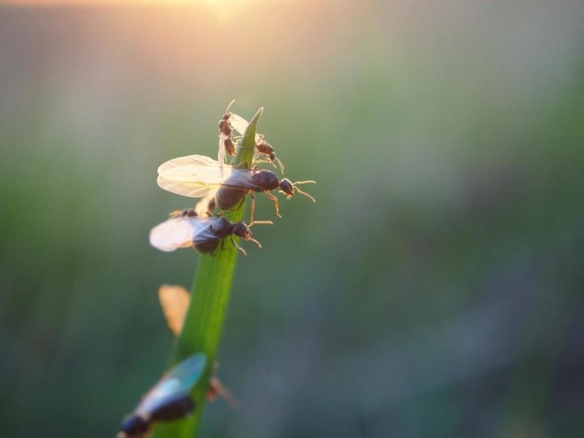 Latające Mrówki W Mieszkaniu Co To Jest Czy Są Groźne Jak
