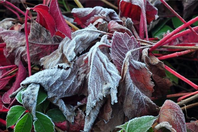 Wiosenne przymrozki mogą spowodować duże straty w uprawach.
