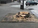 Pabianice. Wycinka drzew przy ul. Zamkowej. Dlaczego wycięto drzewa? ZDJĘCIA