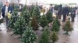 Zakupy świąteczne 2019. Będzie drożej na święta. Ile Polacy wydadzą na Boże Narodzenie?
