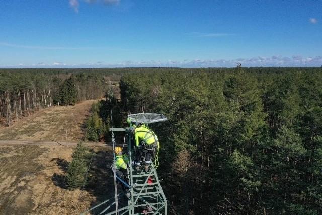 Na terenie Nadleśnictwie Kłodawa stanęła specjalna platforma lęgowa dla ptaków. Została umieszczona na jednym ze słupów linii elektroenergetycznej.