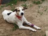 Pies w studni czekał na śmierć. We wsi koło Żychlina strażacy uratowali psa uwięzionego w studni. Nagroda za ustalenie właściciela psa