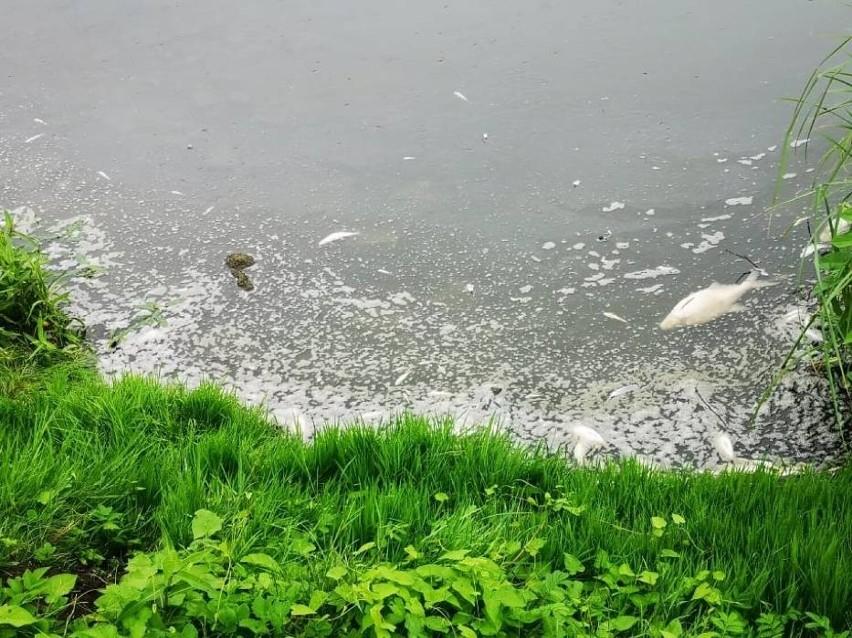 Efekty przyduchy na jeziorze Jelonek....