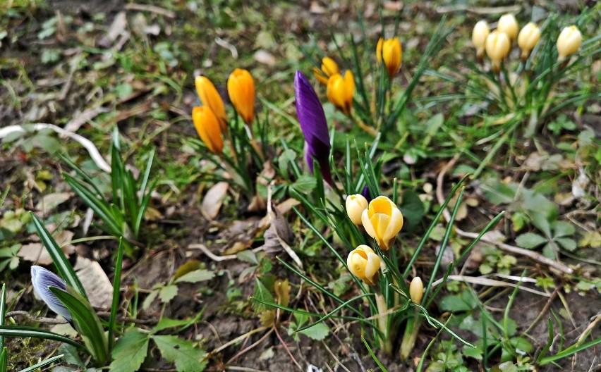 Pogoda dziś, 23 marca...