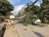 Wichura we Wrocławiu i okolicach. Połamane drzewa, zablokowane drogi [ZDJĘCIA]