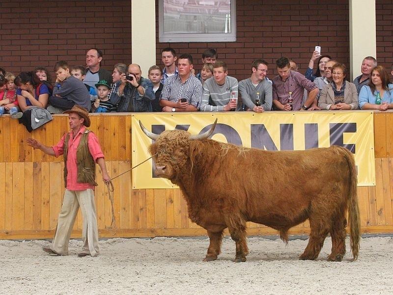 Byki, krowy, świnie. Rolnicy pokazali zwierzęta na wystawie w Zakrzowie