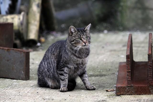 Dwieście kotów na terenie gdyńskich stoczni potrzebuje naszej pomocy. Trwa zbiórka pieniędzy, aby miały co jeść. Wolontariusze zachęcają też do ich adopcji i przyjęcia na przydomowe podwórka.