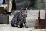 Koty z dawnych terenów stoczniowych potrzebują pomocy. Trwa zbiórka pieniędzy, aby zwierzęta nie były głodne ZDJĘCIA