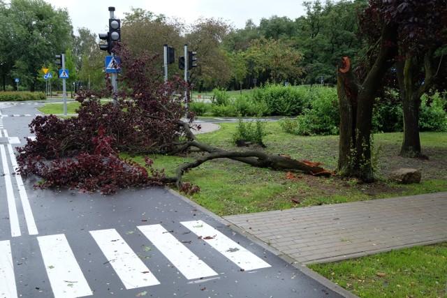 Ostatnio tak mocno wiało w lipcu. Wtedy również strażacy usuwali powalone drzewa
