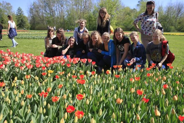 Tulipany zakwitły w Ogrodzie Botanicznym w Łodzi. Na jubileuszowej 10. wystawie tulipanów będzie ich kilkadziesiąt tysięcy