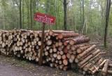 """Puszcza Białowieska: Wandale przestawili znak """"rezerwat przyrody"""""""