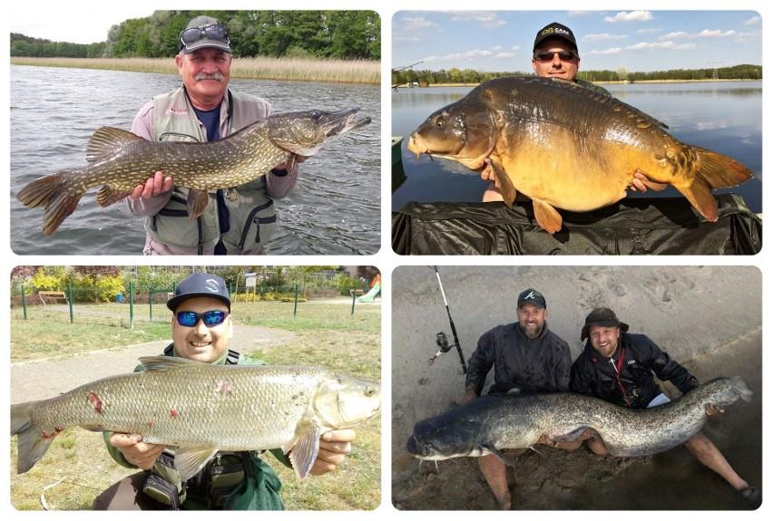 Serwisy randkowe duże ryby