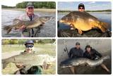 Aaaale ryba! Takie okazy pływają w kujawsko-pomorskich jeziorach i rzekach [zdjęcia]